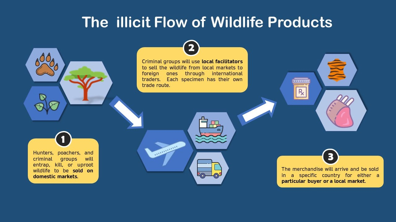The flow of illegal environmental trade